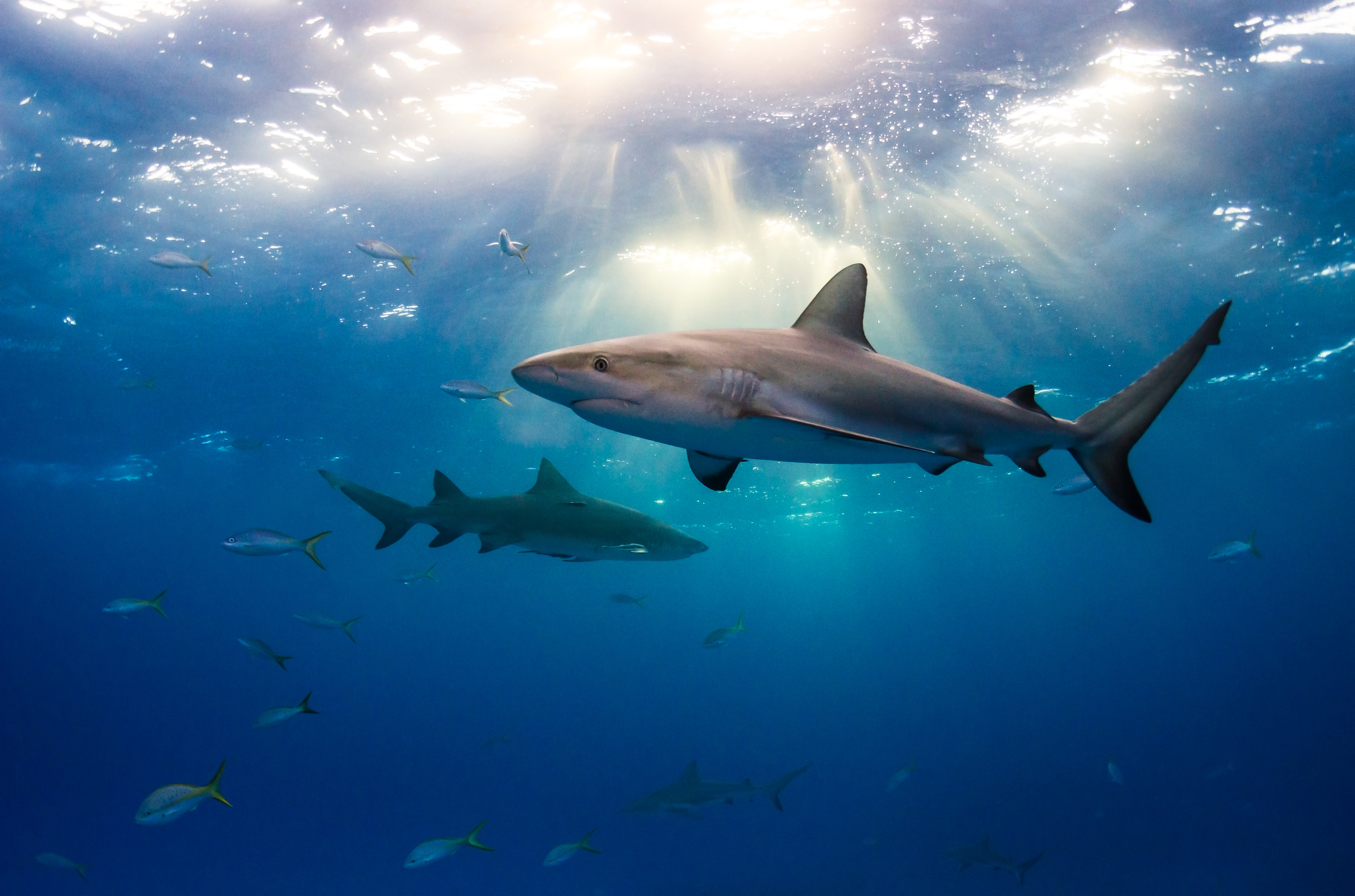Sharks aren't the monsters they're portrayed as – but we're monsters for hunting them