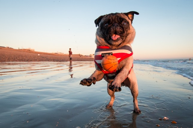 The biggest and best dog friendly beaches in the UK