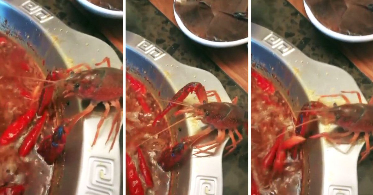 Crayfish cuts off its own claw to survive being boiled alive