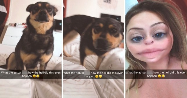 Girl finds dog on her bed after night out