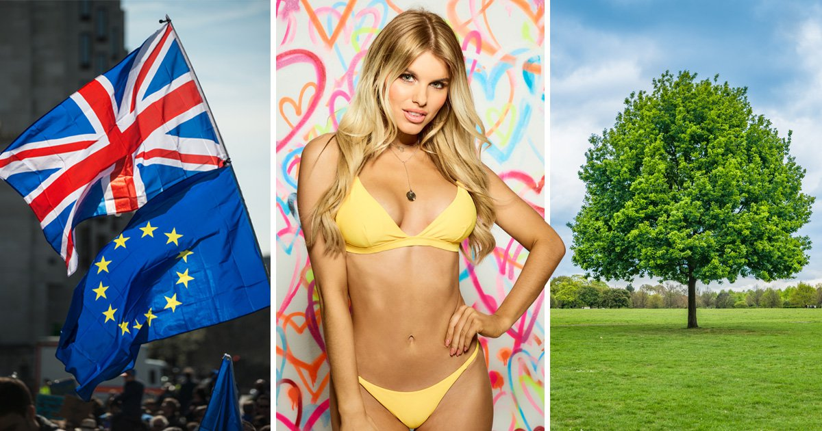 Love Island's Hayley was actually right about worrying about the trees after Brexit, FYI