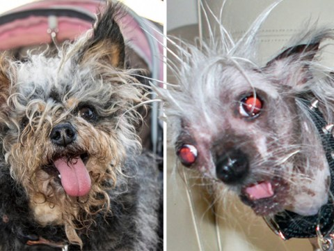Meet the canine contenders for World's Ugliest Dog 2018