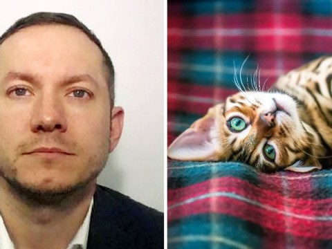 Finance manager stole from firm to fund luxury lifestyle which included pedigree kittens