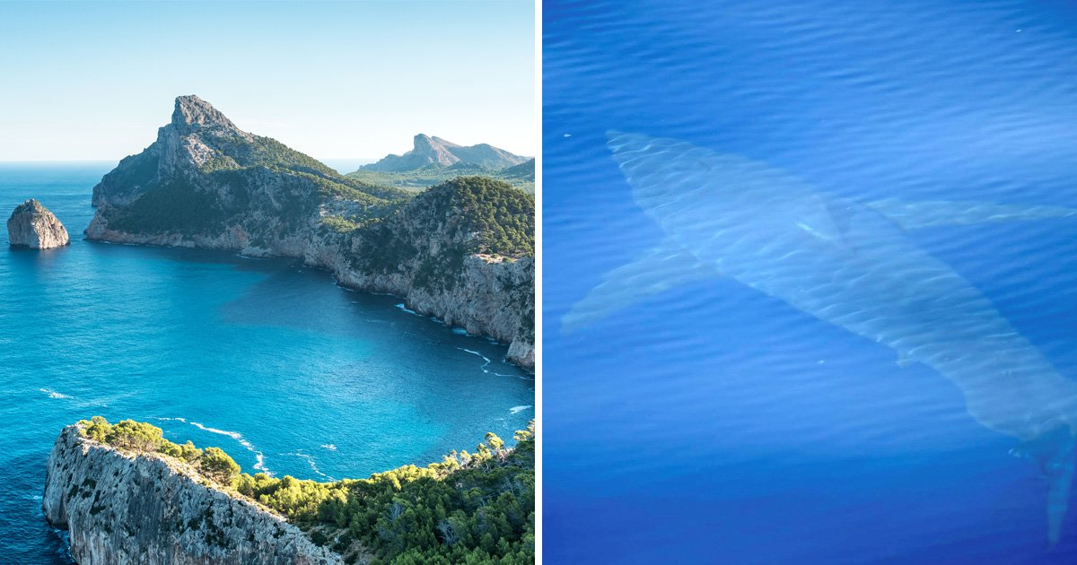 Great white shark spotted off coast of Majorca