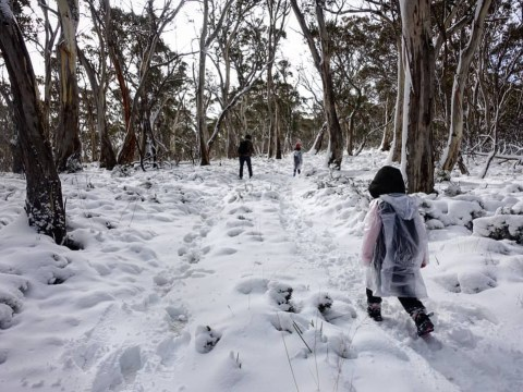 While we're basking in glorious sunshine, Australia's going through a mini ice age
