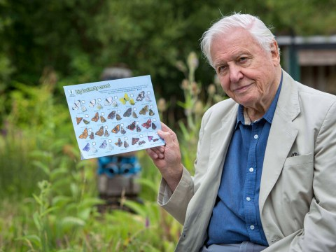 Why is David Attenborough telling us to count butterflies?