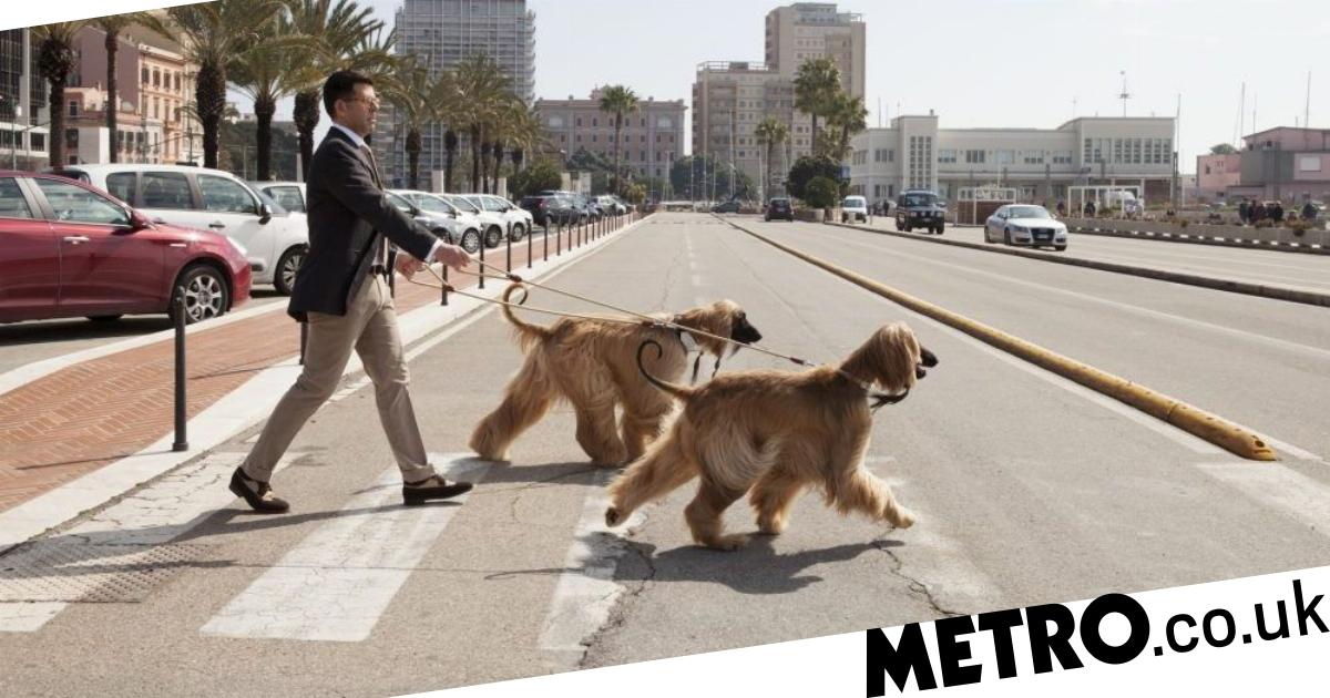 Is it safe to walk your dog in hot weather? | Metro News