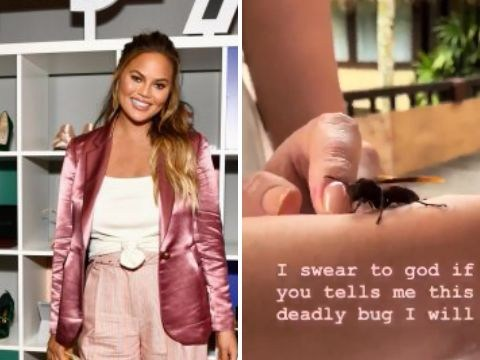 Chrissy Teigen and daughter Luna unknowingly play with terrifying tarantula hawk wasp: 'It's a nice bug'
