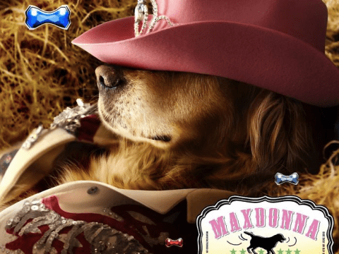 Fashion photographer gets his dog to recreate Madonna's most iconic photos