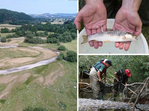 Hundreds of fish are rescued after river dries up because of record heatwave