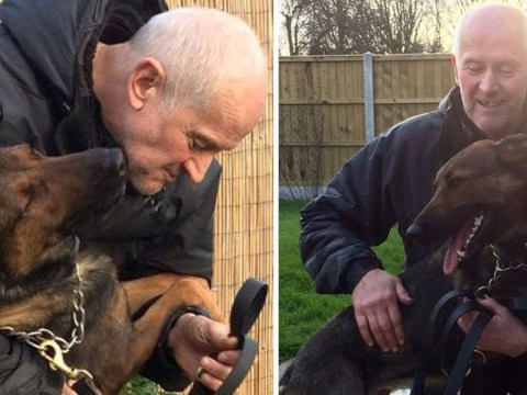 Police dog found 'unresponsive' in force car dies