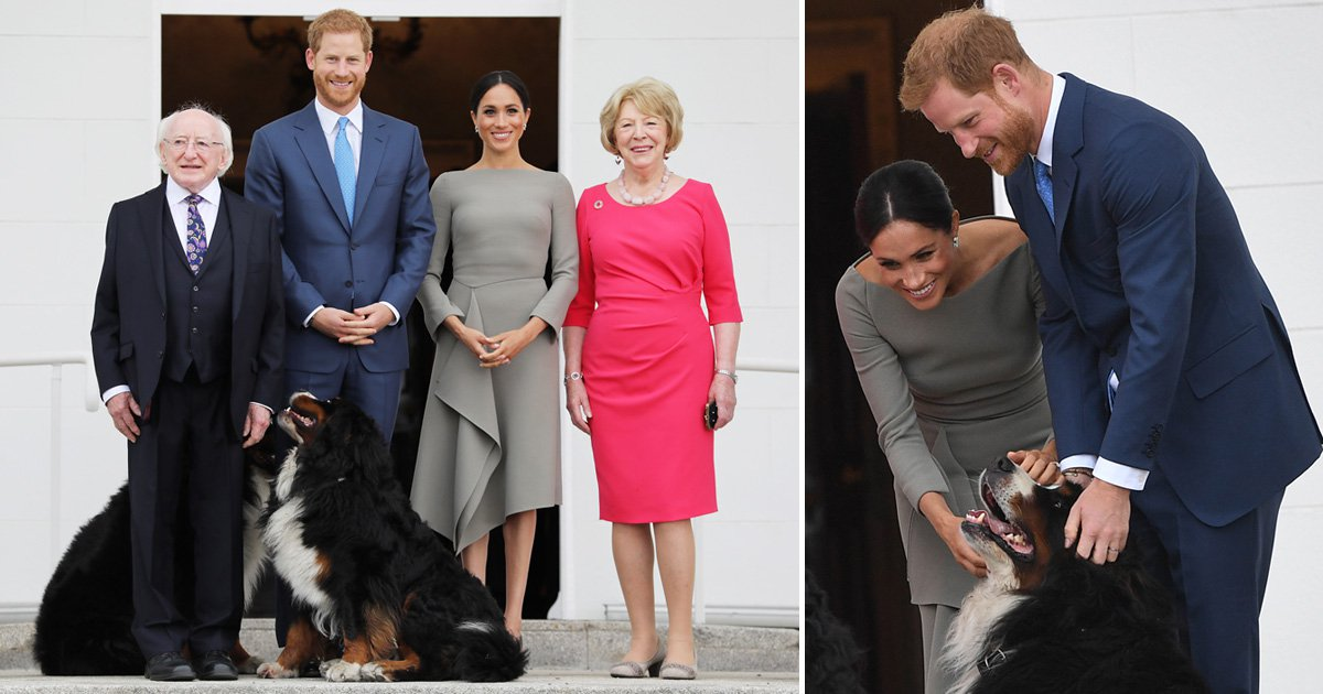 Harry and Meghan's visit to Ireland interrupted by two huge dogs