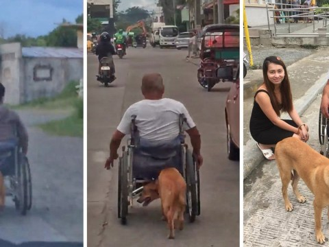 Dog pushes owner in wheelchair after motorbike accident leaves him paralysed