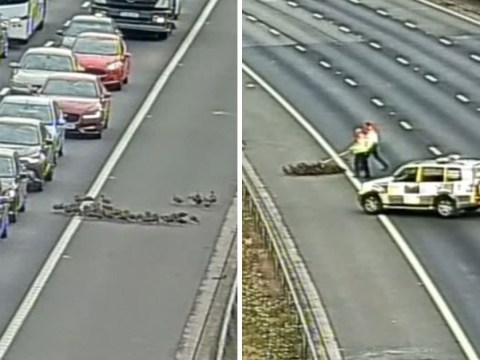 Drivers on M25 were delayed for an hour because 30 ducks walked onto motorway
