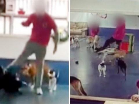 Doggy daycare staff secretly filmed kicking crying animals