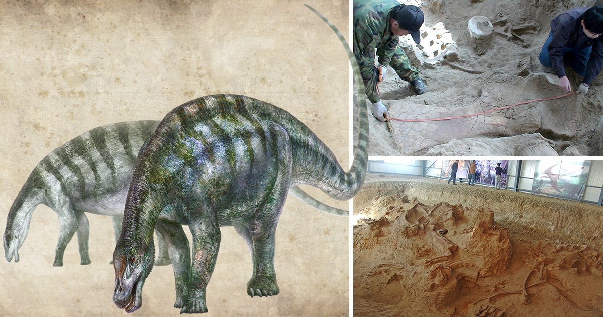 'Amazing Dragon' fossil discovery rewrites story of how massive dinosaurs conquered the world