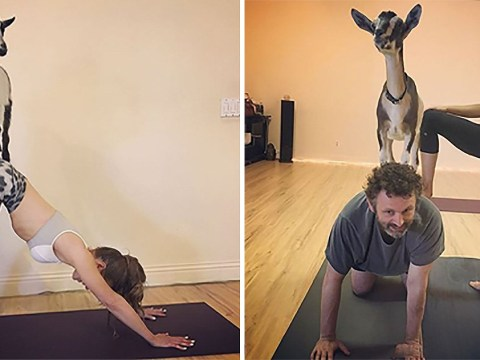 Kate Beckinsale spent her birthday doing goat yoga with ex Michael Sheen and daughter