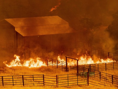 Think our wildfires are bad? This is what they're dealing with in San Francisco