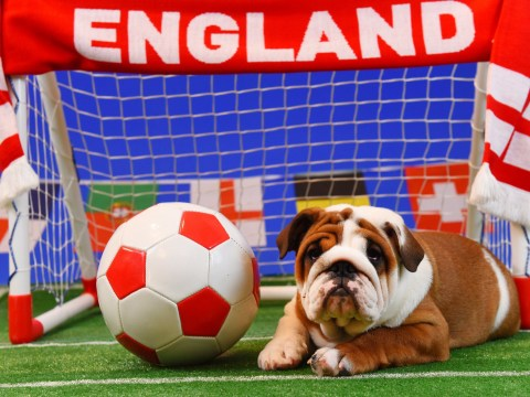There's a puppy live stream to help you deal with stress while watching the World Cup