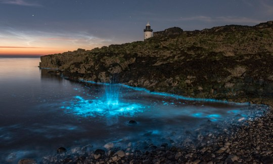 The rare Bioluminescent Plankton lights up the ocean in Penmon, Anglesey, Wales with Trwyn Du Lighthouse in the background. See Masons copy MNLIGHTS: This astonishing photograph captures the extremely rare moment the sea off the UK coast line turned a luminous blue colour. Amateur photographer Paul Joinson has captured the moment when Bioluminescent Plankton swam in an area of the Irish sea and stunned in a light up blue. Bioluminescent Plankton is formed from a group of chemicals to help make plankton grow - the light is produced by a series of oxidation reactions set off by a catalyst called lucifease.