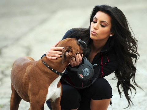 The £10K Kim Kardashian reportedly spent on fake dog testicles should have been donated to animal shelters