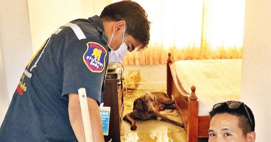 NEWS COPY - WITH PICTURES A Canadian man was found naked on his bedroom floor having been half-eaten by his beloved pet dog. Glenn Pattinson, 62, passed away around 10 days ago at his rented apartment in the Sattahip district near Pattaya, Thailand. With beloved pet pooch Cujo locked alone in the room, the hungry five-year-old Thai breed mutt began chomping away on his master's corpse. Rescue workers were only alerted last Friday when neighbours began to complain about Cujo's constant barking and became suspicious that he wasn't being taken for a walk. Paramedics who arrived found Glenn's face had been chewed down to his skull and his ribs were exposed from where his torso had been eaten. Cujo was sitting faithfully by his master's side with dried blood around his mouth as police arrived - posing for a bizarre picture in which they point accusingly at the confused canine. Resident Bell Suchin, 34, said: ''The foreign man had lived her for about three years and he was friendly. He loved his dog, he took him for walks every night. ''He lived alone but he had a lot of different women visitors coming to the house. So I think he was happy, he always was happy when he was outside walking.'' Medics said that Glenn had been taken to hospital two weeks ago and later discharged to return home. They said that a number of diabetes related tables were found in the room. Police said they were not treating the death as suspicious. Police Lieutenant Colonel Pasawat Siripon Noppakun said: ''Mr Glenn Stanley Pattinson was found not wearing any clothes. He had been dead for between seven and 10 days. The male dog was by his side and did not have water for several days. ''There were no signs of fighting or the room being ransacked. We know that the dead man lived alone. The corpse has now been taken for a forensic examination to find the cause of death. The embassy will also be contacted for relatives to be informed for funeral arrangements.'' ENDS
