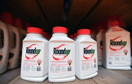 Roundup products are seen for sale at a Home Depot store in San Rafael, California, on July, 9, 2018. A lawyer for a California groundskeeper dying of cancer took aim at Monsanto on July 9, 2019 as a jury began hearing the lawsuit accusing the chemical giant of ignoring health risks of its top-selling weed killer Roundup. / AFP PHOTO / JOSH EDELSONJOSH EDELSON/AFP/Getty Images