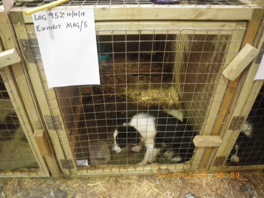 Sickening images have been revealed that show the horrendous conditions at a Lincolnshire home where 176 animals were found dead. Inspectors discovered that Maxine Cammock?s home in Dye Drove, Dyke Village, Bourne, was full of animals in a shocking condition. caption: Daisy was one of the dogs locked up by Maxine Cammock