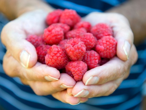 Apparently, raspberries are really great for your circulation