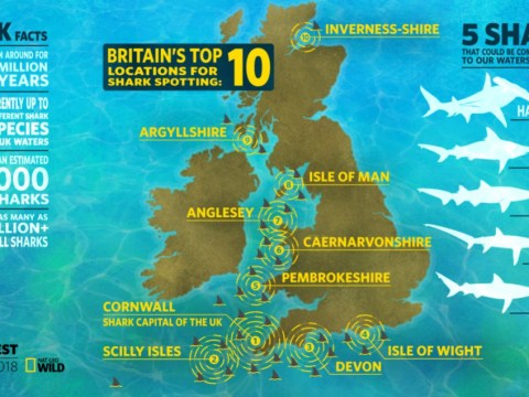 Map reveals where swimmers need to be on the lookout for sharks