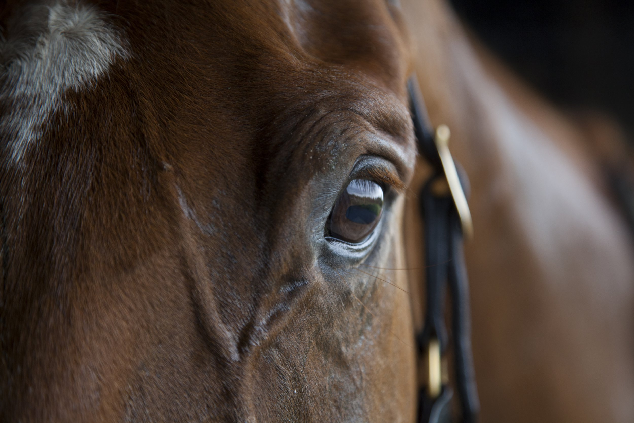 Man says horse gave him sexual consent by winking at him