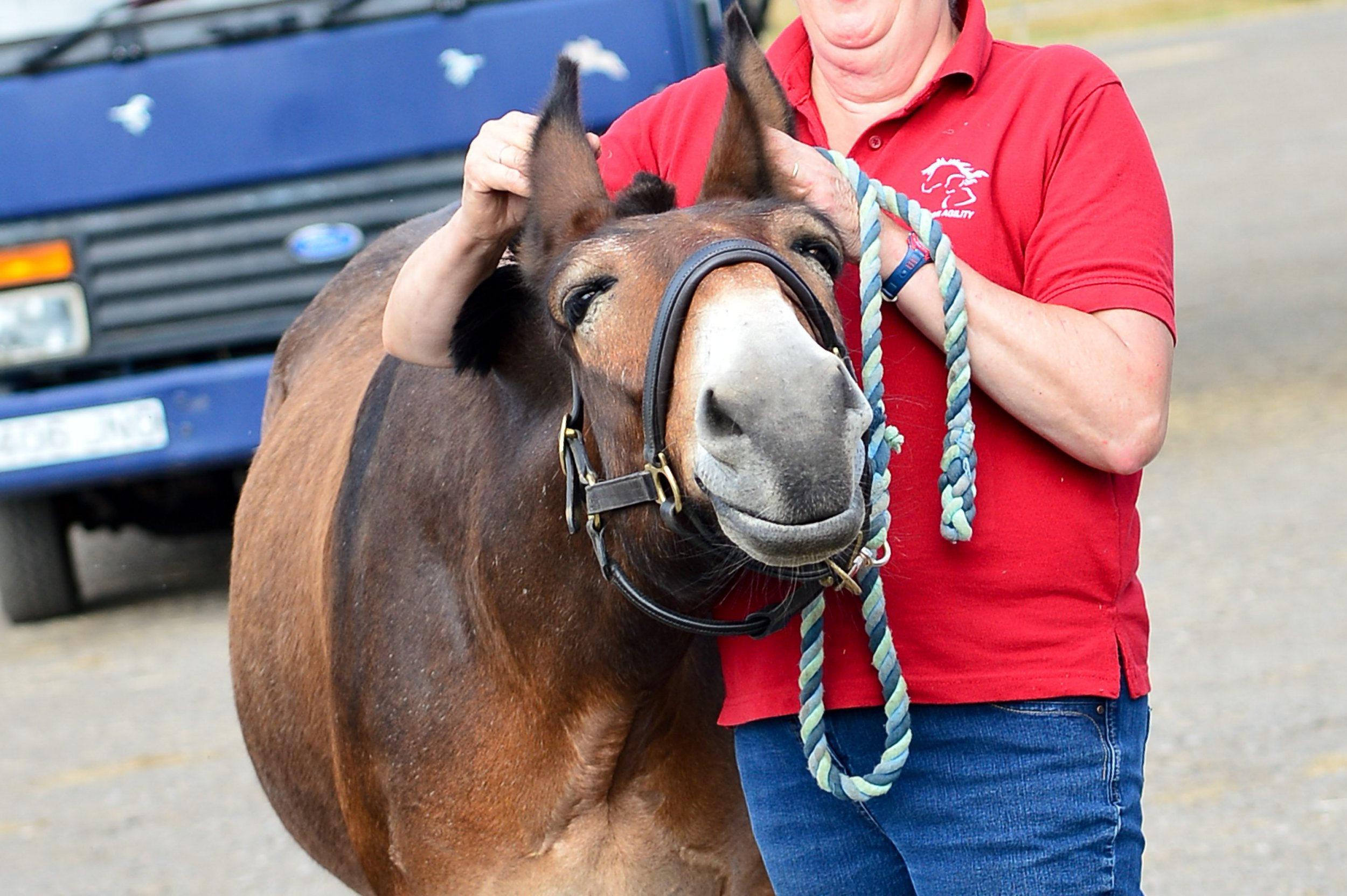 Christie McLean, 30, from Stroud in Gloucestershire, has just competed at The Summerhouse equestrian centre in the intro dressage test of a British dressage team quest, whilst riding Wallace, a rescue mule from Sidmouth donkey sanctuary. Walace is the first ever mule to compete under British dressage and he won with a score of 67.6%. See SWNS story SWMULE