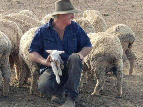 Farmer plans to shoot 1,200 sheep because he can't afford to feed them
