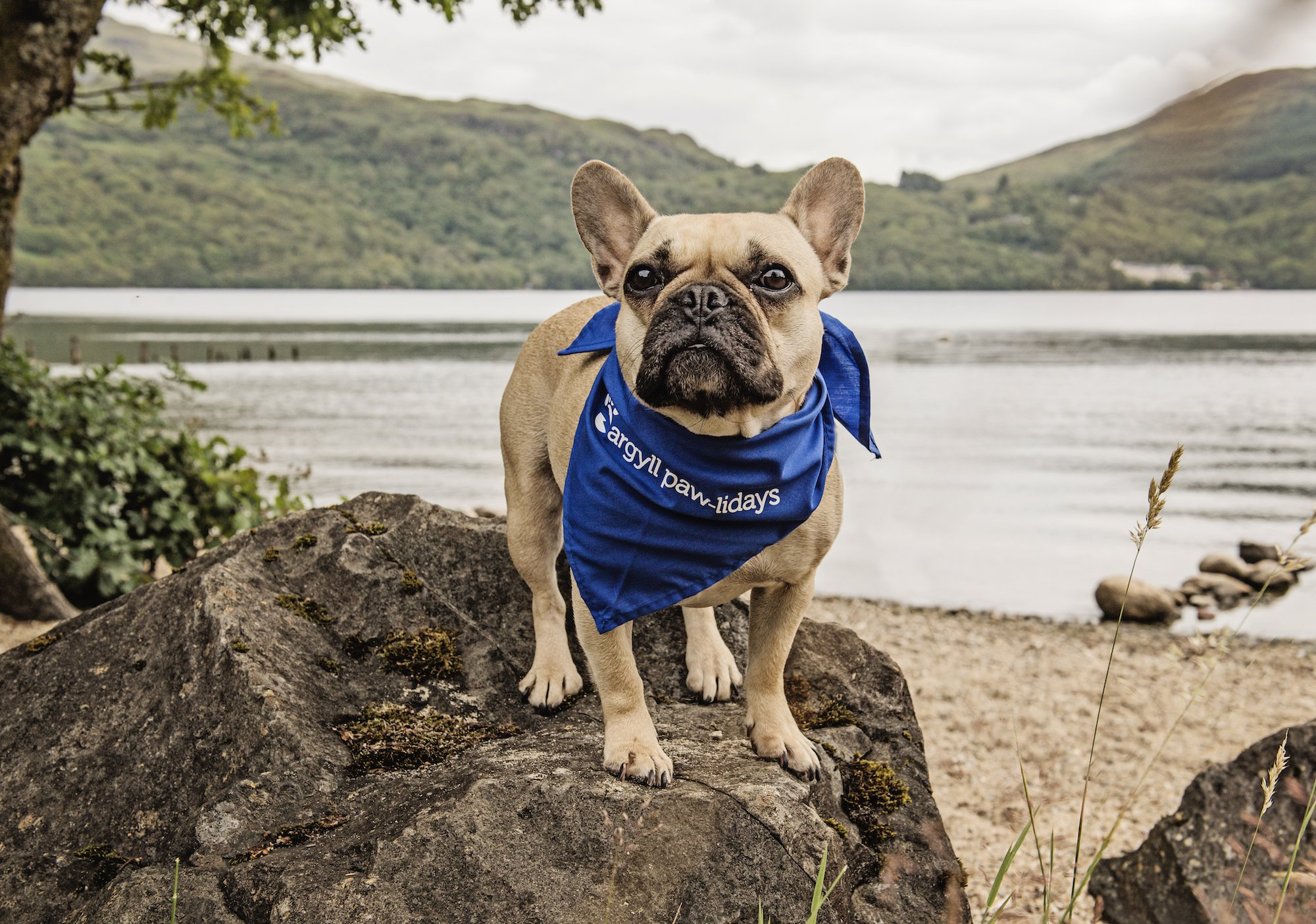 (Picture: Paws Pet Photography/Argyll Holidays) A 56% upsurge in families taking their dogs with them on staycations across Scotland will result in leading animal charity, the Scottish SPCA, enjoying a new wave of donations. A group of four-legged friends were unleashed on Loch Lomond?s private dog beach yesterday (Sunday 29 July) as Argyll Holidays launched its new partnership which will see them raise a minimum of ?2,000 in the next year for the Scottish SPCA.