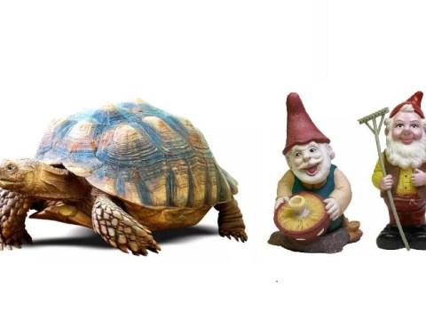 A dead cat's collar, a garden gnome and a turtle: The weirdest gifts teachers have got from kids