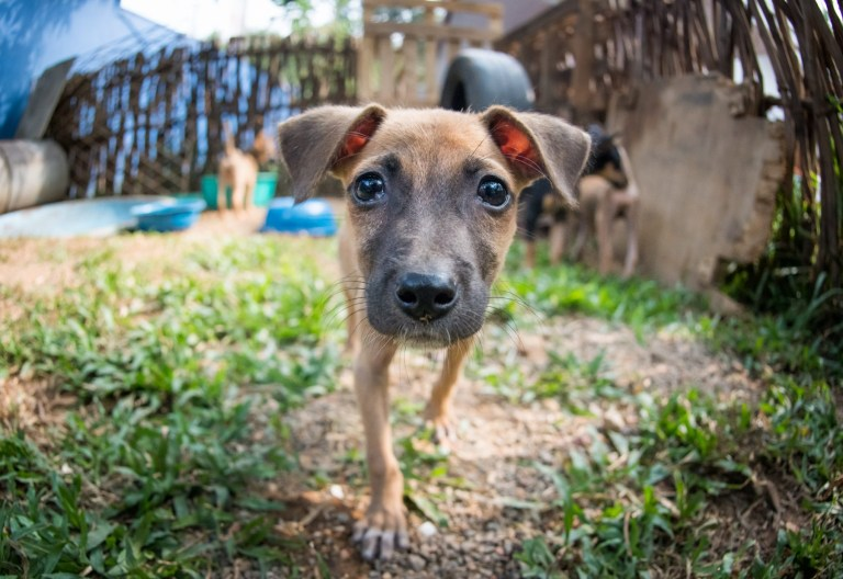 A puppy at WECare Worldwide dog clinic in Sri Lanka