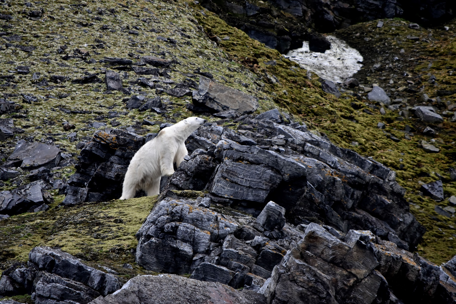 The realm of the polar bear: Here's what it's like to explore the remote wilds of Svalbard by boat