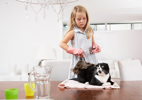 If you're allergic to cats, here's how to reduce symptoms around the pets