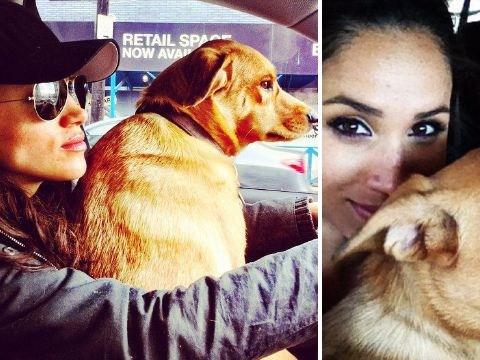 Meghan Markle and Prince Harry welcome adorable dog to royal family