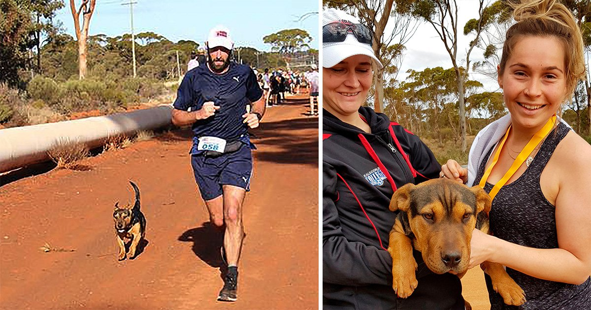 Stray pup completes a half marathon… but ends up in dog jail