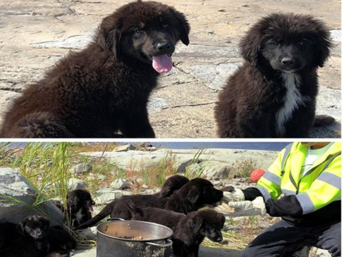 Litter of seven gorgeous puppies rescued from uninhabited island