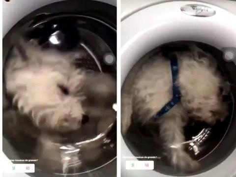 Women traps dog in washing machine in 'bid to gain more Instagram followers'