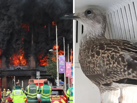 Baby bird rescued from huge Primark blaze that ripped through historic building