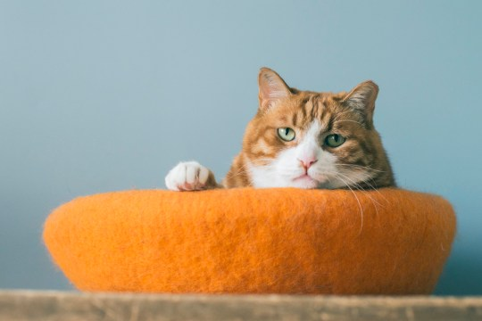 International Cat Day: How to tell if your cat is sad and