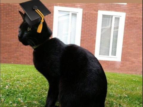Meet Rolf, the Warwick University campus cat in line for an honorary degree