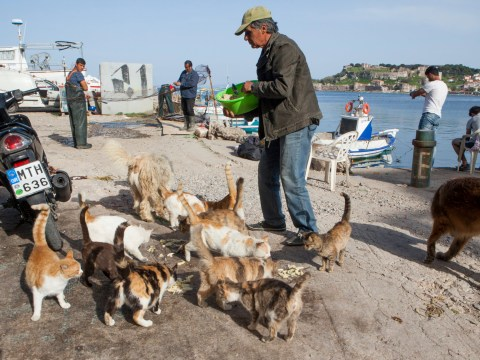 Fancy quitting your job and getting paid to look after a bunch of cats on a Greek island?