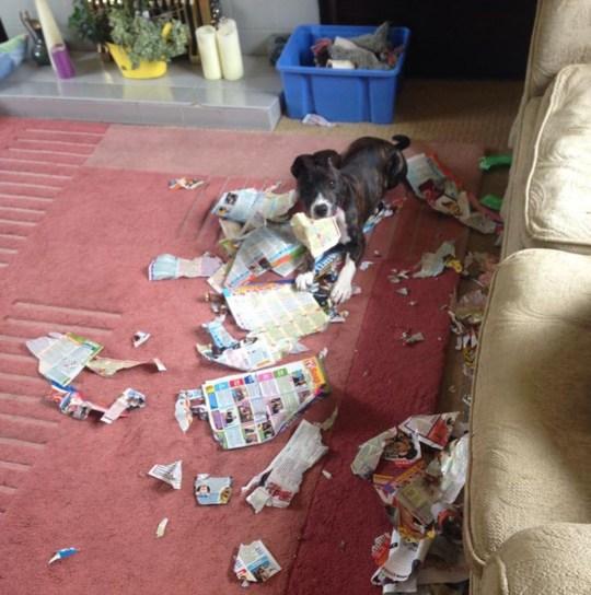 Britain's top 10 naughtiest pets have been revealed | Metro News