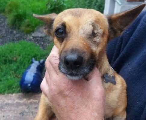 A dog has lost one its eyes after a thug threw a ROCK at her face. Razzle the pooch lost her left eye when a cruel attacker threw a rock at her in the Over Hulton area of Bolton, Greater Manchester. Caption: Razzle the dog, who lost her left eye after she was struck by a rock in the Over Hulton area of Bolton, Greater Manchester, on August 2