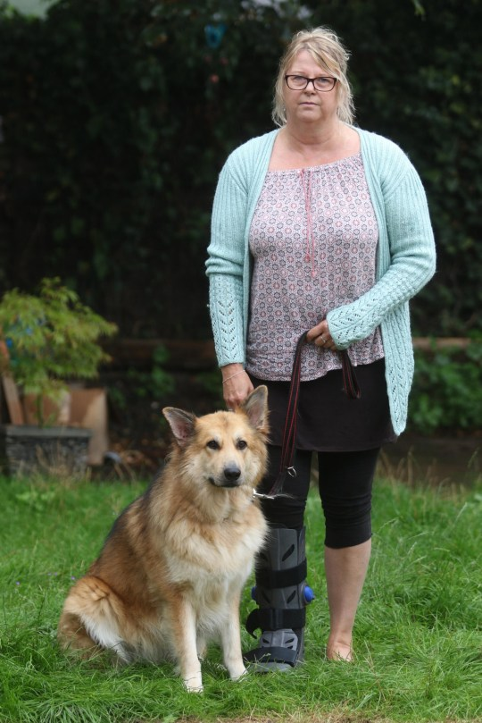 Date: August 29 2018 Location: Colchester, Essex, England. A pet owner said she was ???absolutely gobsmacked??? when she was ordered to pay ??1,000 for walking her dog OFF its lead. Jane Hurry took her beloved Alsatian, Max, for a stroll near to her home in Colchester, Essex. The mum-of-two was crossing playing fields when she was approached by a council warden who informed her she was being fined because Max, four, was not on his lead. Pictured: Jane with Max. Words: Essex News and Pictures.