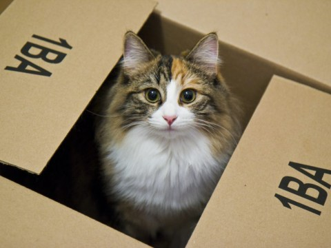 How to move house with your cat